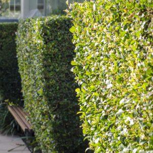 garden-maintenance-sm