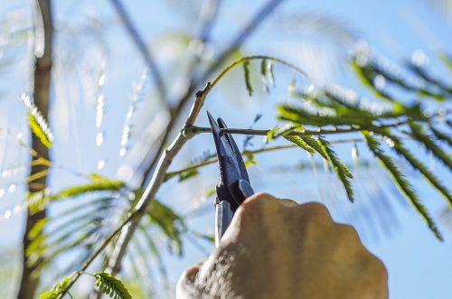 pruning-sm